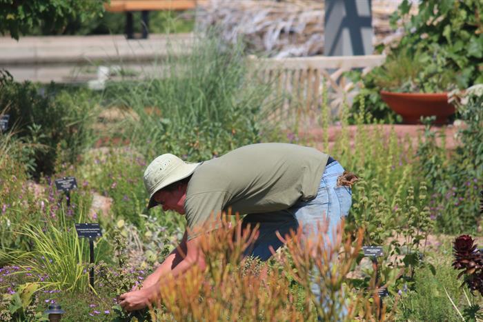 Home studies garden maintenance gardening skills for Landscape design courses home study
