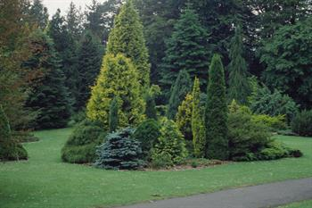 Conifer Garden Ideas evergreen shrub garden on hill slope with conifers evergreens ornamental grass in blue walled raised garden in different levels judy white gard Other Uses For Conifers