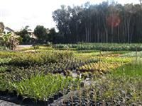Production nursery management e learning online for Landscape design courses home study