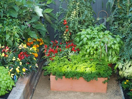Grow Vegetables | Vegie Garden Design