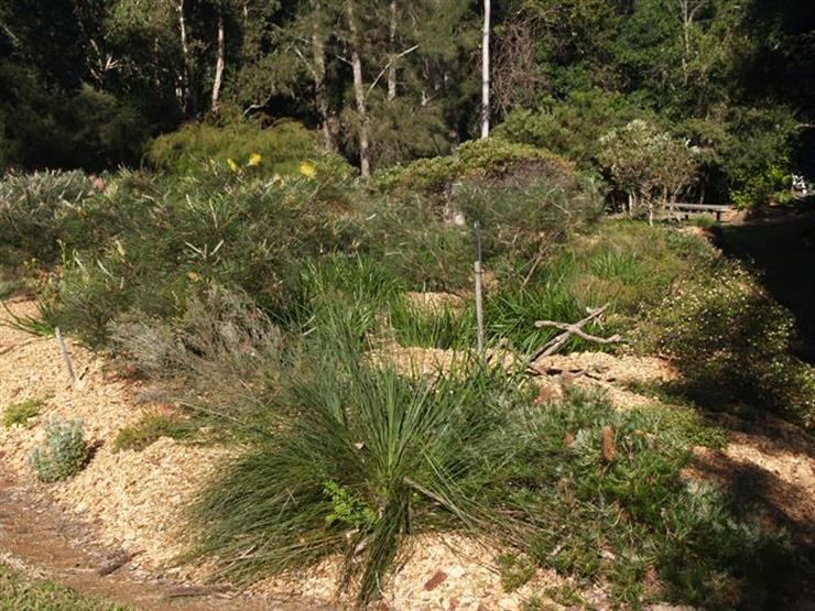 Australian plants courses australian native plant course for Garden design queensland