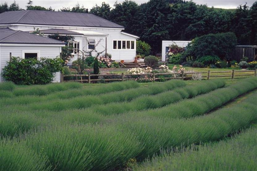 Flower farming certificate home studies online course for Landscape design courses home study