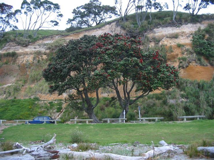 21 fine landscape gardening courses adelaide for Adelaide innovative landscaping