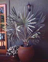 Indoor plants courses distance learning interior - Interior design courses distance learning ...